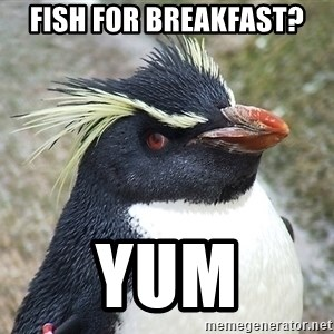 So What Penguin - fish for breakfast? yum