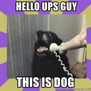 Yes, this is dog! -  hello ups guy this is dog