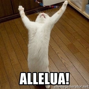 praise the lord cat -  ALlelua!