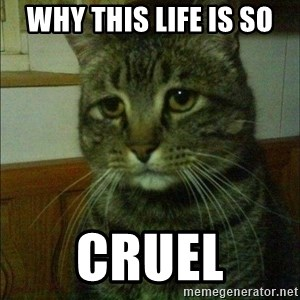 Depressed cat 2 - why this life is so cruel