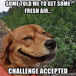 dogweedfarm - some told me to get some fresh air... challenge accepted
