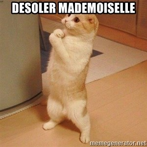 Sorry Cat - Desoler mademoiselle