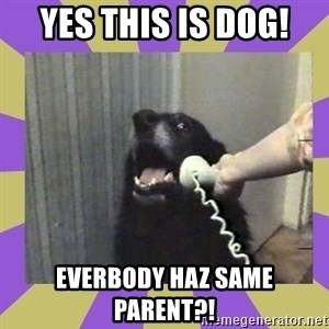 Yes, this is dog! - Yes tHIS IS DOG! EVERBODY HAZ SAME PARENT?!