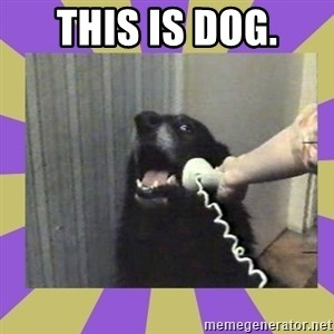 Yes, this is dog! - This is dog.
