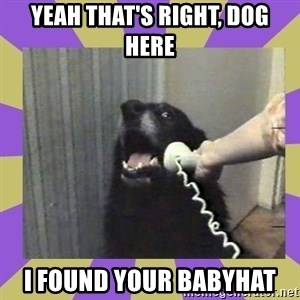 Yes, this is dog! - yeah that's right, dog here i found your babyhat
