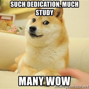 so doge - Such dedication, much study many wow