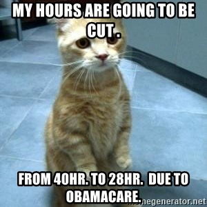 sadcat5 - my hours are going to be cut . From 40hr. to 28hr.  due to Obamacare.