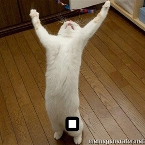 praise the lord cat -  .