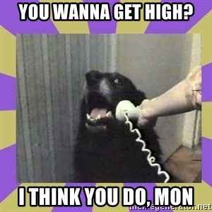 Yes, this is dog! - you wanna get high? I think you DO, MON