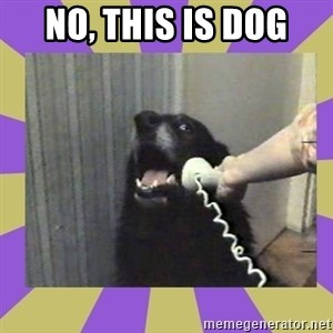 Yes, this is dog! - No, this is dog
