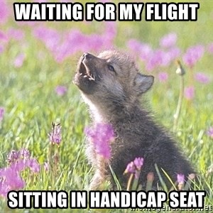 Baby Insanity Wolf - waiting for my flight sitting in handicap seat
