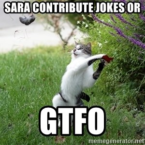 GTFO - Sara contribute jokes or  GTFo