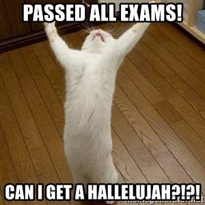 praise the lord cat - Passed all exams! can i get a hallelujah?!?!