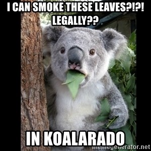 Koala can't believe it - i can smoke these leaves?!?! legally?? in koalarado