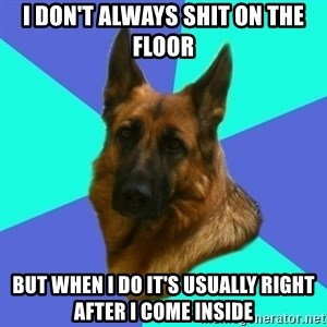 German shepherd - I don't always shit on the floor But when I do it's usually right after I come inside