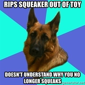 German shepherd - Rips squeaker out of toy Doesn't understand why you no longer squeaks