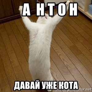 praise the lord cat -    а  н т о н  давай уже кота