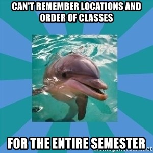 Dyscalculic Dolphin - can't remember locations and order of classes for the entire semester