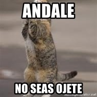 Begging Cat - Andale  no seas ojete