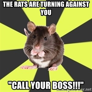 "Survivor Rat - THE RATS ARE TURNING AGAINST YOU ""CALL YOUR BOSS!!!"""