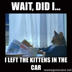 i should buy a boat cat - wait, Did I... I left the kittens in the car