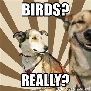 Stoner dogs concerned friend - Birds? Really?