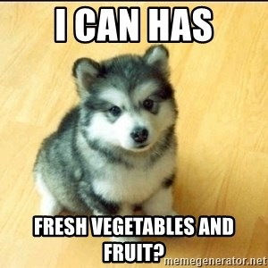 Baby Courage Wolf - i can has fresh vegetables and fruit?