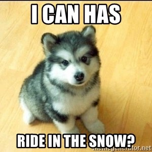 Baby Courage Wolf - i can has ride in the snow?