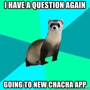 Obvious Question Ferret - I have a question again going to new chacha app