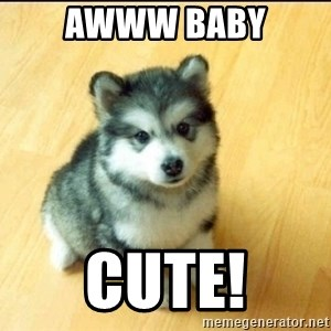 Baby Courage Wolf - awww baby cute!