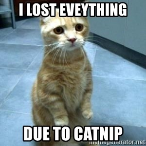 Sadcat - i lost eveything due to catnip