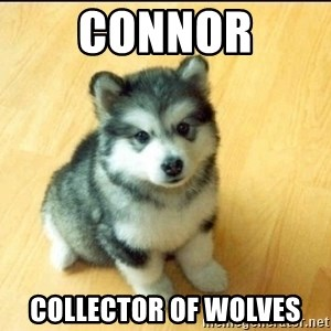 Baby Courage Wolf - Connor Collector of Wolves