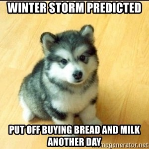 Baby Courage Wolf - Winter storm predicted Put off buying bread and milk another day
