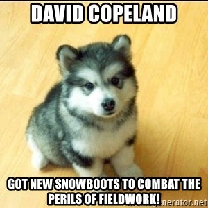Baby Courage Wolf - David copeland got new snowboots to combat the perils of fieldwork!