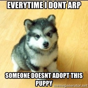 Baby Courage Wolf - everytime i dont arp someone doesnt adopt this puppy