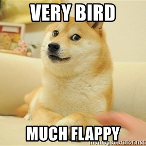 so doge - very bird much flappy