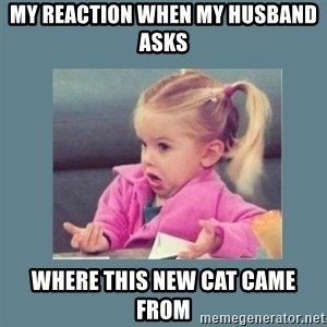Baby Good Luck Charlie - my reaction when my husband asks where this new cat came from