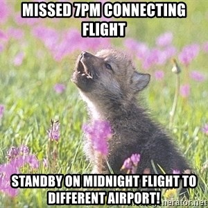 Baby Insanity Wolf - Missed 7pm connecting flight Standby on midnight flight to different airport!