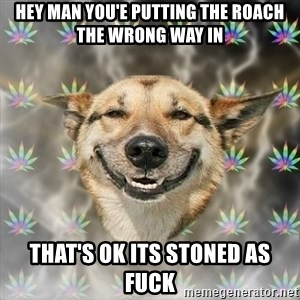 Stoner Dog - hey man you'e putting the roach the wrong way in that's ok its stoned as fuck