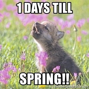 Baby Insanity Wolf - 1 DAYS TILL SPRING!!