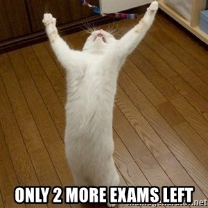 praise the lord cat -  only 2 more exams left