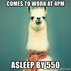 Pancakes llama - comes to work at 4pm asleep by 550