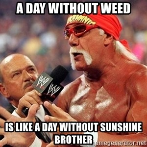 Hulk Hogan TKE - a day without weed is like a day without sunshine brother