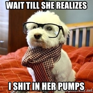 hipster dog - wait till she realizes i shit in her pumps