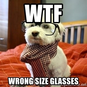 hipster dog - WTF wrong size glasses