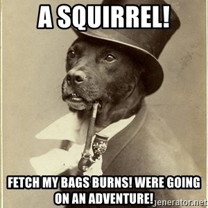 rich dog - A Squirrel! Fetch my bags burns! were going on an adventure!