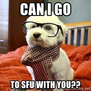 hipster dog - Can I go to SFU with you??