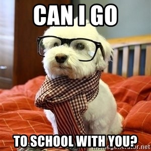 hipster dog - can i go to school with you?
