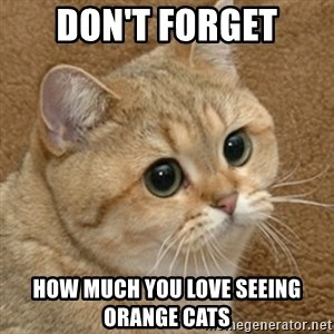 motherfucking game cat - don't forget how much you love seeing orange cats
