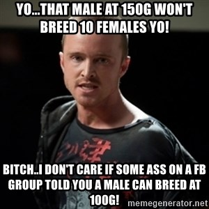 Jesse Pinkman says Bitch - yo...that male at 150g won't breed 10 females yo! bitch..I DON'T CARE IF SOME ass ON a FB group TOLD YOU A MALE CAN BREED AT 100G!
